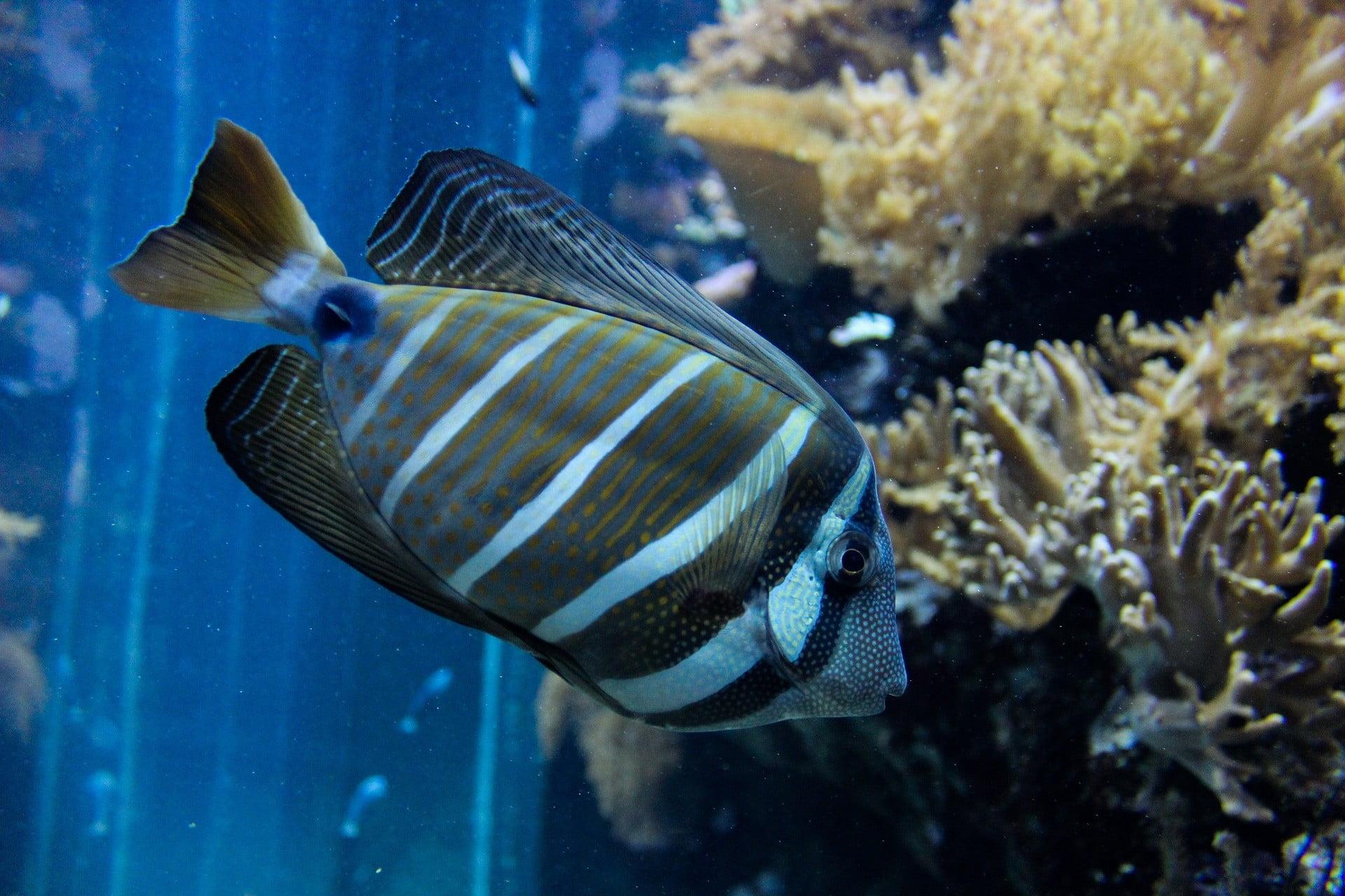 Photo of a fish inside an aquarium
